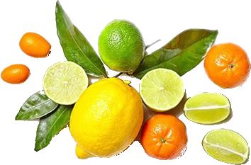 Citrus Volkameriana Image